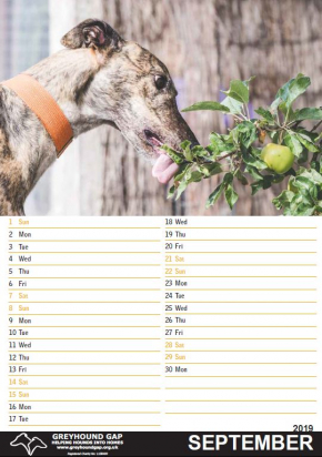 Glorious Greyhounds Calendar 2019